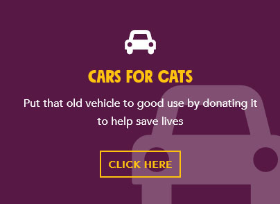 Cars for CAT